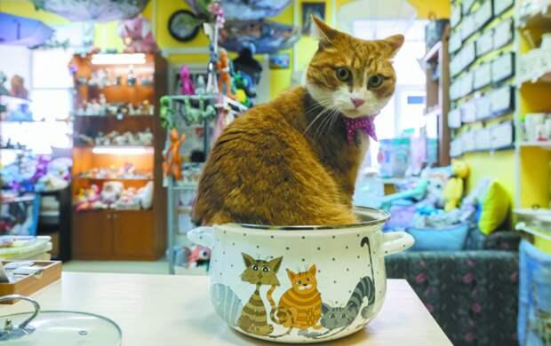 Кот Ланселот приводит покупателей в свой магазин: как он стал талисманом магазина