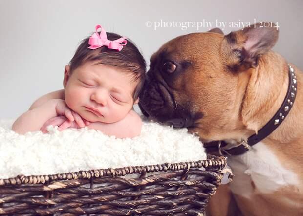 младенцы и собаки первая фотосессия (11)