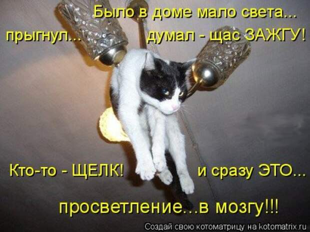 Лучшая котоматрица недели (25 фото)