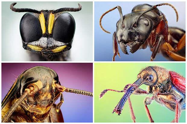 BIGPIC41 Портреты насекомых
