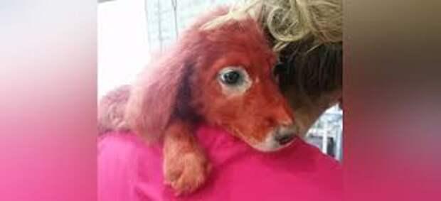 На греческом рынке продавался щенок необычной окраски…
