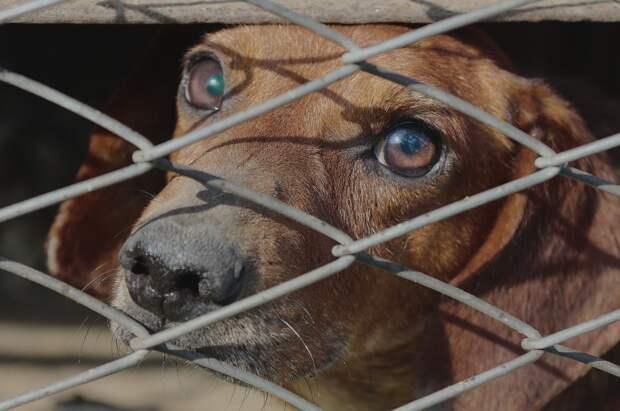 Пожизненный изолятор для бешеных псов создают в Крыму