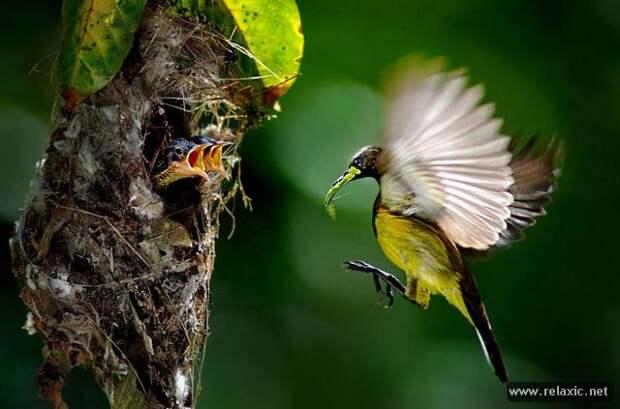 Природа Малайзии (фотопутешествие)