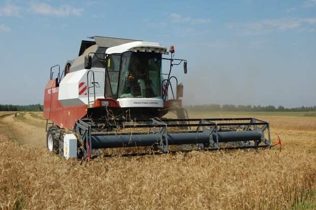 Россия нарастила экспорт зерна на 29%