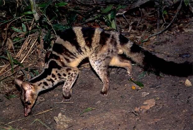 19 уникальных видов животных, о некоторых мы и не слышали