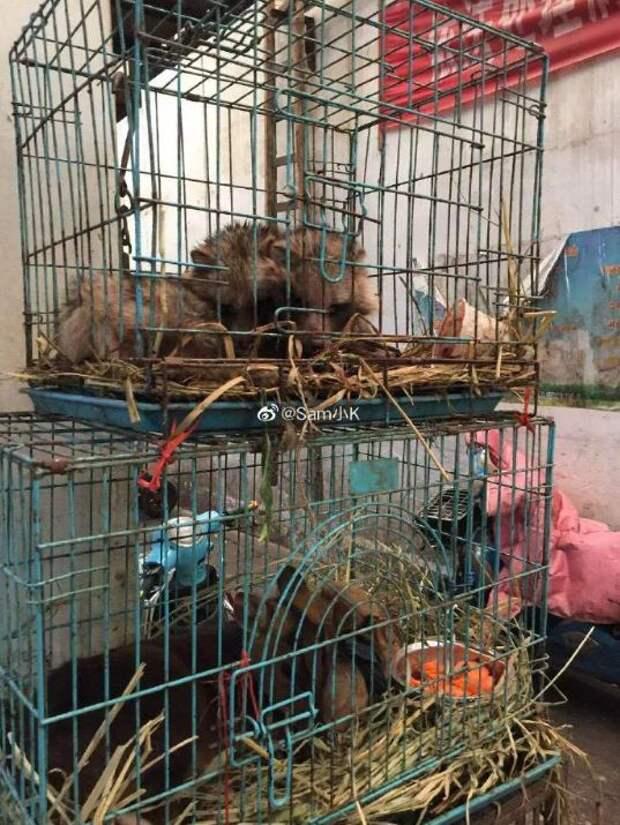 6 фото рынка в Ухане, с которого началась эпидемия коронавируса