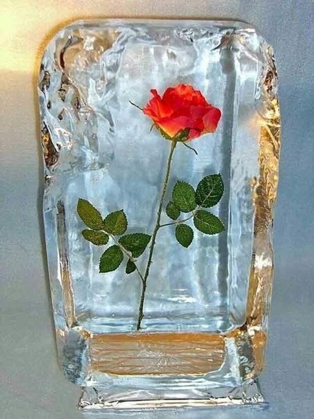 Скованные льдом (diy)