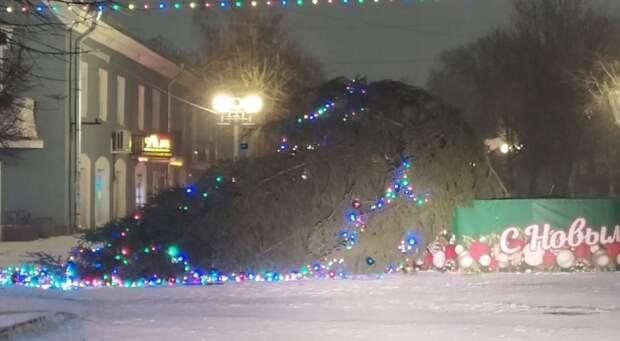 На Соборной улице в Гатчине упала новогодняя ель