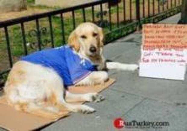 В Турции появилась собака, которую гладят за деньги