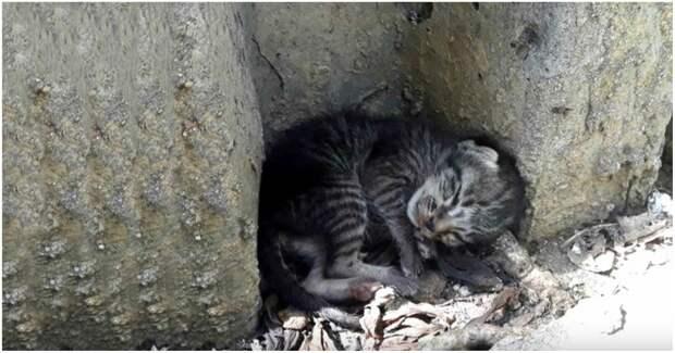 Одинокий котенок спал посреди улицы и мечтал о теплом доме… Угадайте, что случилось потом?)