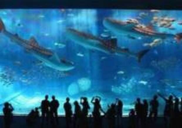 Выбран лучший в мире океанариум