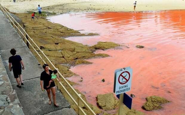 krovavoaliokean 3 Вода на пляжах Австралии окрасилась кроваво красным, напугав отдыхающих