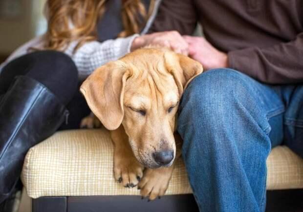 Победитель в категории «Спасение собак» великобритания, животные, интересное, конкурс, собака, собаки