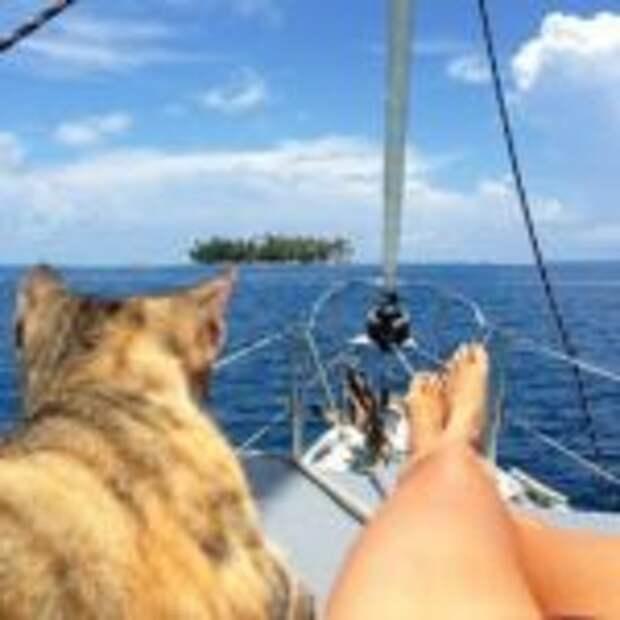 Даже они на отдыхе, а ты нет: фотографии котиков, которые вызовут зависть