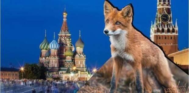За что россияне любят свою страну?