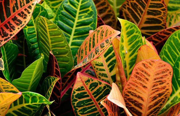 Растения видят лучше нас. А почему?