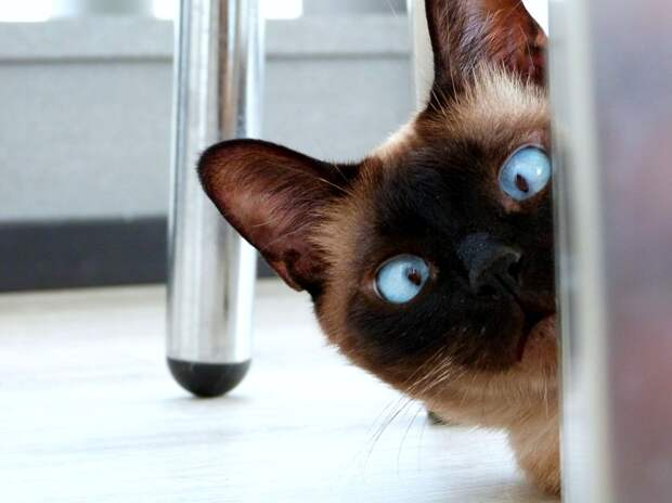 Жители Ижевска могут бесплатно привить домашних животных от бешенства