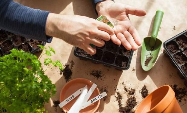 Что можно посеять и посадить в огороде в марте?