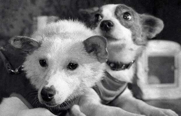 Собаки-герои: как сложилась судьба Белки и Стрелки после полета в космос