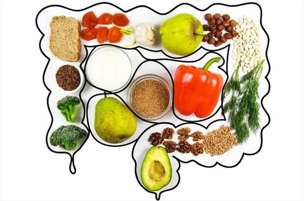Какие полезные вещества синтезируются в кишечнике