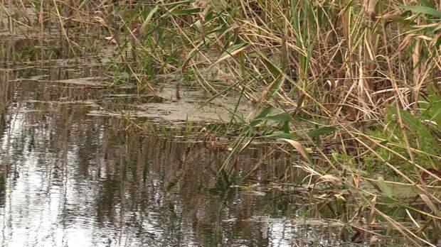 Озеро под Нижним Новгородом исследуют в поисках второй пропавшей девочки