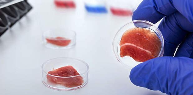 В Казани будут учить создавать мясо в лаборатории