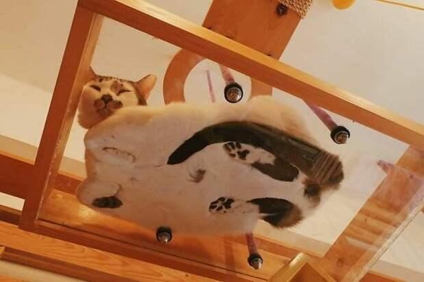 Так можно и напугаться котики, коты, милота, мотики, сквозь стекло