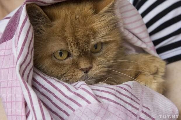 У рыжей 13-летней кошки Пуси — опухоль ветеринар, животные, история, спасение