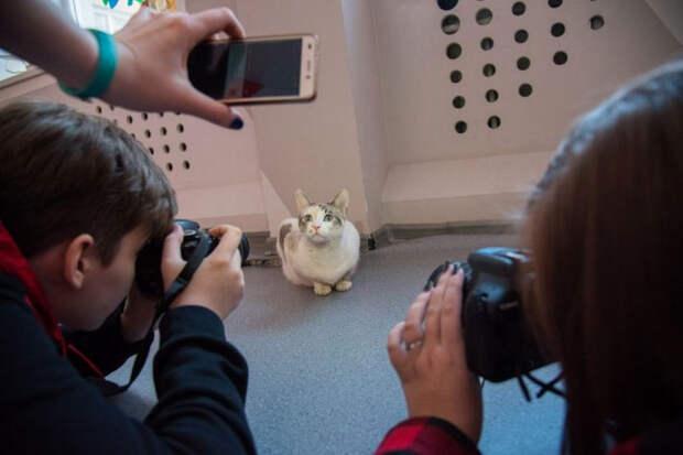 Бездомная кошка пришла в фотостудию и стала моделью, у нее даже есть «зарплата»