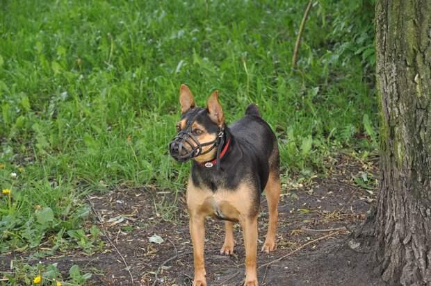 Нападали ли на вас домашние собаки на улицах Марьиной рощи? – новый опрос жителей района