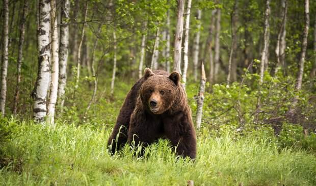 В Глазовском районе Удмуртии жители встретили медведей