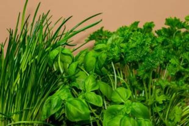 Как спасти завядшую зелень?