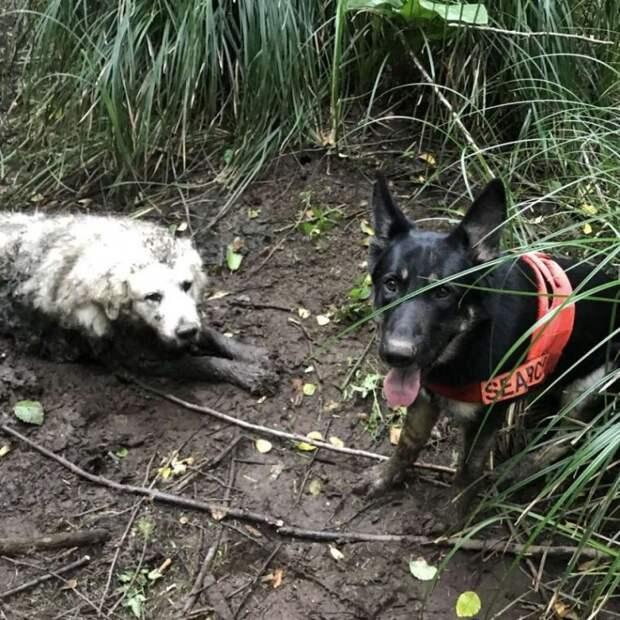 Щенок из приюта стал служебной собакой и спас другое животное