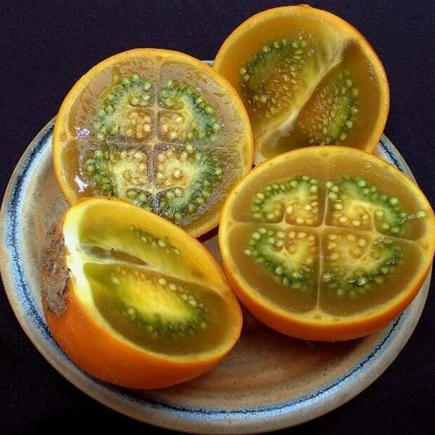 Паслён китоский, или Наранхилья — плодовый кустарник семейства Паслёновые еда, интересное, неизвестные, плоды, природа, растения, съедобные, фрукты