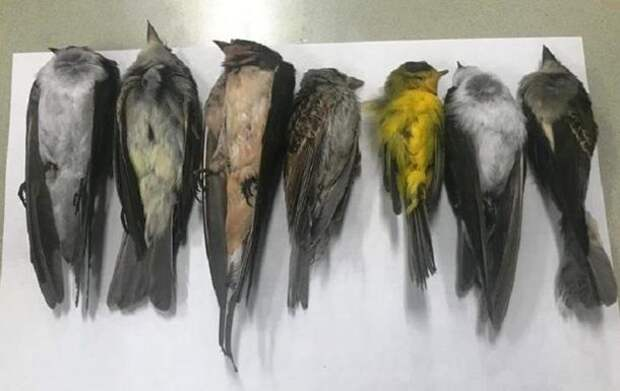 В США и Мексике обнаружили мертвыми сотни тысяч птиц