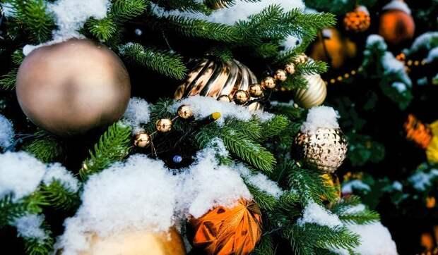 В Северном началась установка новогодних елей Фото с сайта mos.ru