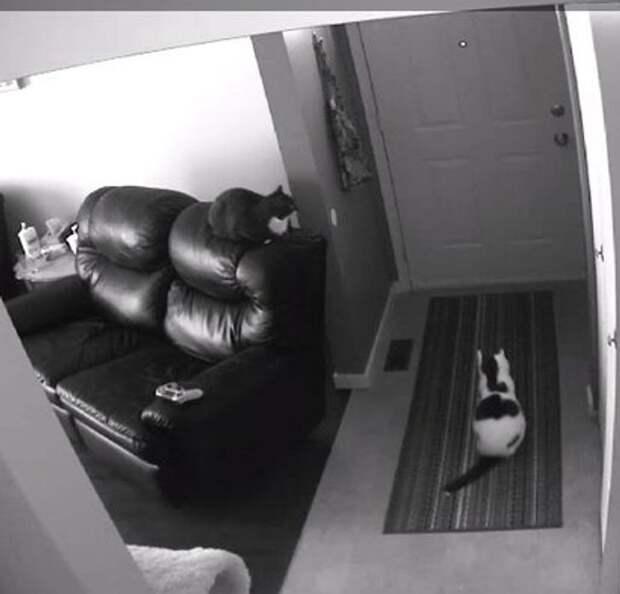 коты ждут хозяина