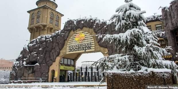 Скончался президент Московского зоопарка Владимир Спицин. Фото: Ю. Иванко mos.ru