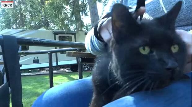 Семья спустя два года нашла кошку, пропавшую во время пожара