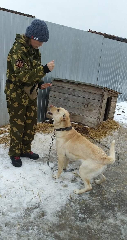 Хозяин не занимался своей собакой, и жители поселка забили тревогу лабрадор, порода, стерилизация