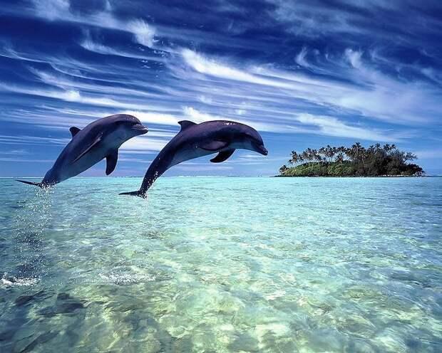 Удивительное о дельфинах