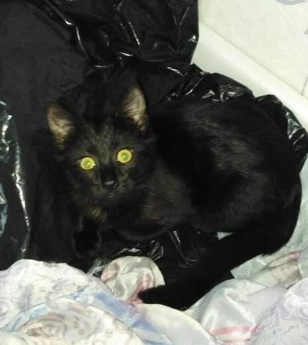 Житель Марфина разыскивает пропавшую кошку