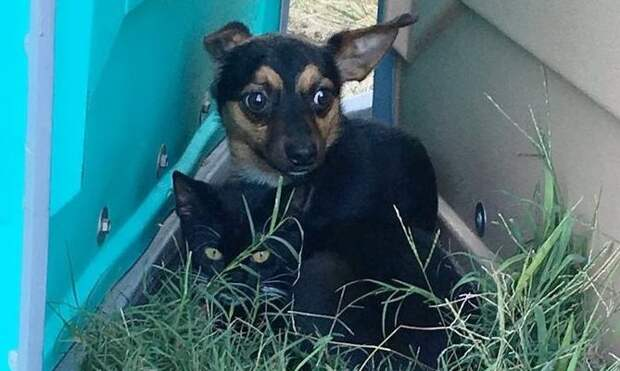 Бездомные песик и кот вместе спасались от голода и холода и вместе нашли дом