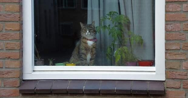 пока хозяева на работе, котики ждут и скучают (фото pixabay.com)
