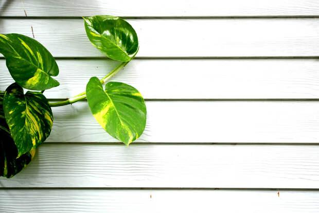 8 домашних растений, которые помогут хорошо высыпаться