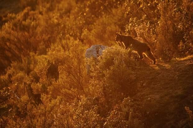 12 лучших фотографий дикой природы 2020 (ч.II)