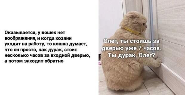 кошка ждет хозяина