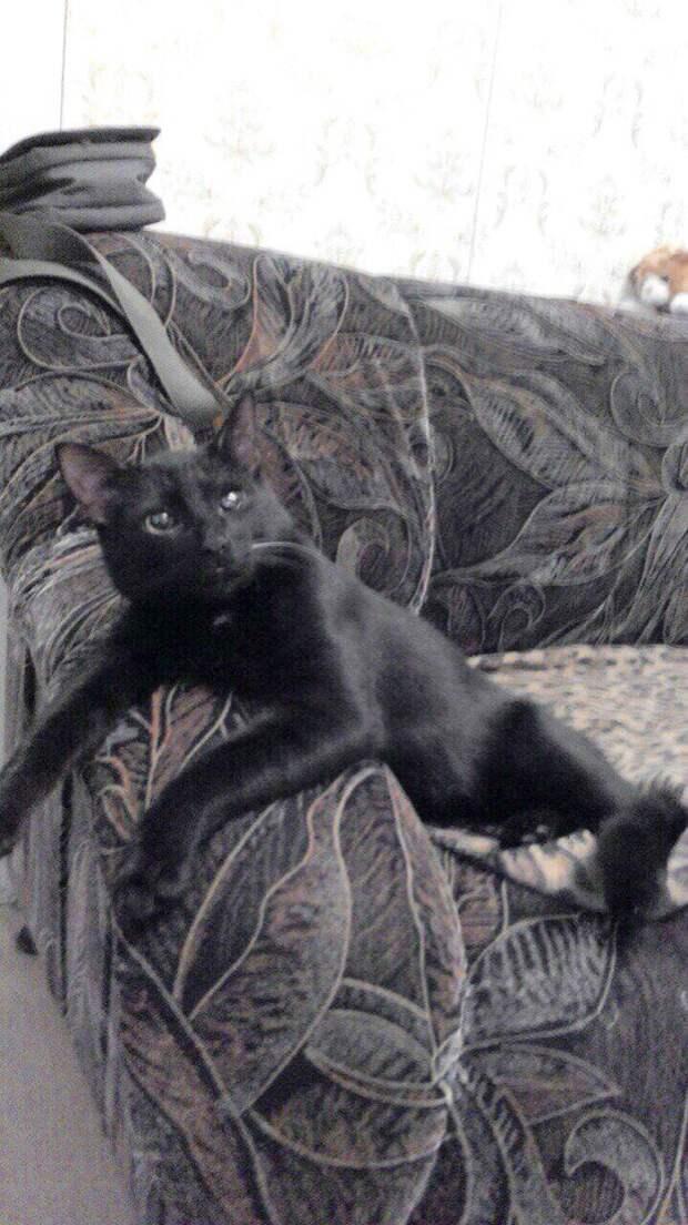 Крохотный котенок чудом пережил удар о дно мусорного бака истории спасения, история спасения, котенок, черный котенок
