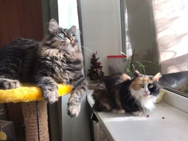 Кошка потеряла хозяйку, а родственники выставили ее в подъезд вместе со старым диваном