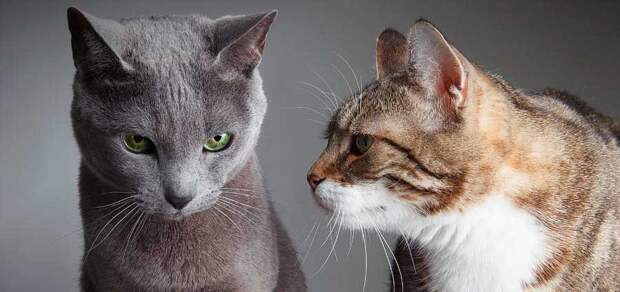 https://wiki4pets.org/wp-content/uploads/2015/03/two_cats_at_home.jpg